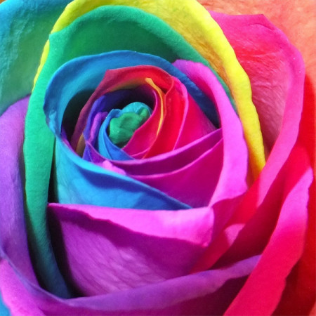 Rainbow rose bouquet multi coloured petals to make an impact for Multi colored rose petals